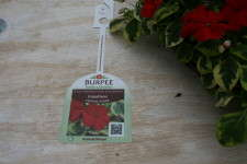 Burpee Home Gardens uses QR Codes on tags to make plant selection an easy to understand–and fun–process.