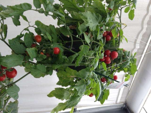 New-Age Vegetables A Gateway To Next Gardening Gen