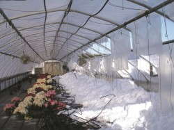 Barlow Flower Farm lost 10 greenhouses to snow accumulation.