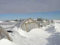 Almost eight feet of snow destroyed greenhouses at Linder's in 2010.
