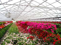 County Farm Plant Company offers vegetable plants, hanging baskets, flowers, wholesale garden center and nursery stock and more.