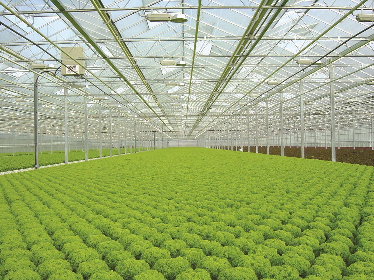 Hydroponics Give Growers Control Greenhouse Grower
