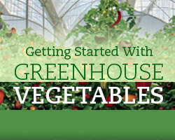 Getting Started With Greenhouse Vegetables