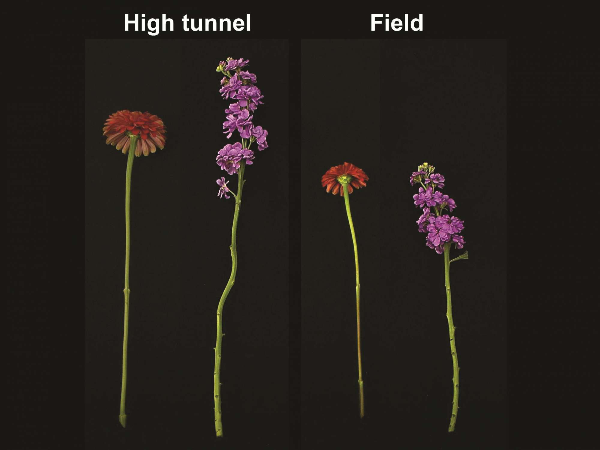 Do High Tunnels Make The Cut?