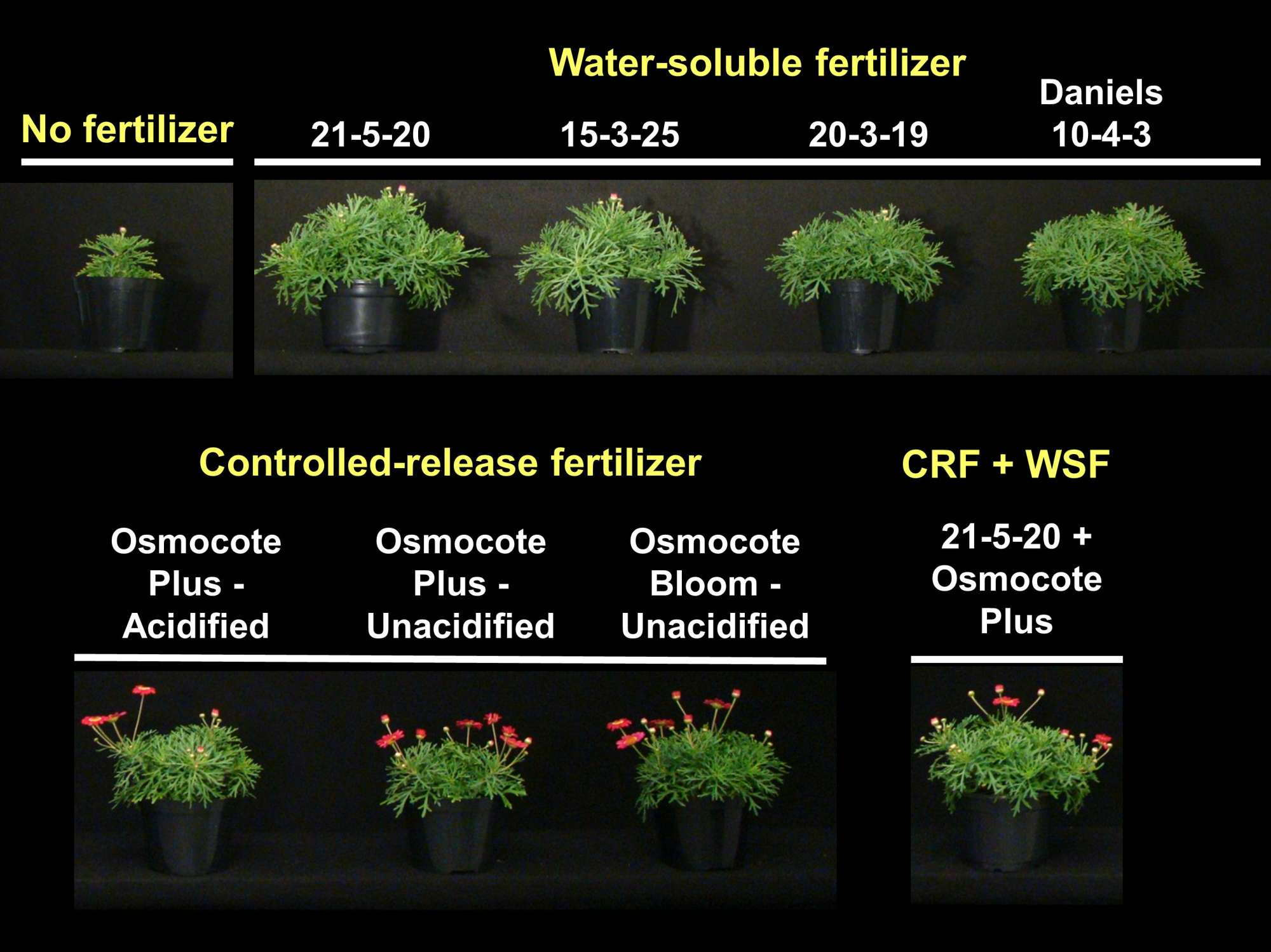 Bedding  Plants and CRFs