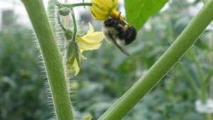 """Industry Perspective: Systemic Insecticides And Bees: Are We Revisiting """"Silent Spring""""?"""
