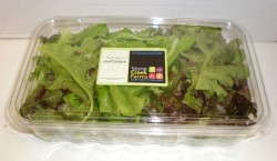 Greenhouse Lettuce Packaged