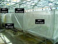 Fig. 1. Propagation bench with no shade cloth or shade cloth providing 31 percent, 68 percent or 86 percent shade. Supplemental light from high-pressure sodium lamps are used to create four different daily light integrals during root development.