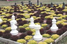 The living chess set at Meadow View Growers