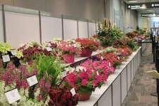 OFA 2012 varieties display