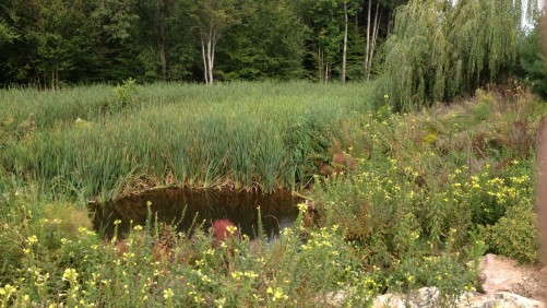 Using Pond-Wetland Systems To Treat Greenhouse Runoff