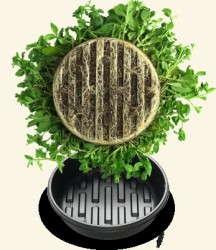 Plant Pie