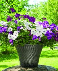 Stella Collection plastic planters from Pride Garden Products