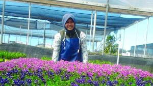 Greenhouse Operations In Indonesia