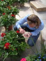 Scouting is a critical factor in a successful biocontrols program.
