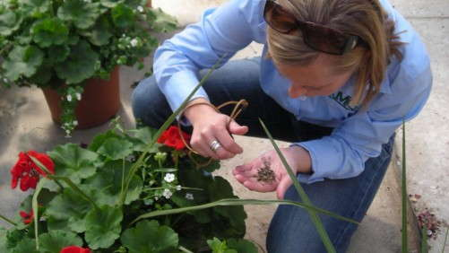 Biocontrols: Four Tips On Using Them In The Greenhouse