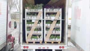 Eco-Friendly Greenhouse Racks For Your Operation