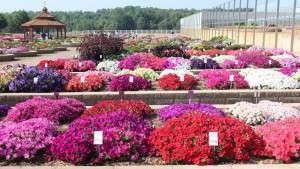 Metrolina Announces First Winner Of Its Plant Of The Year Contest