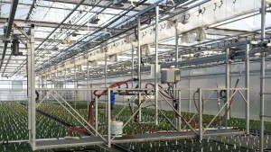 Common Objections To Mechanization In The Greenhouse