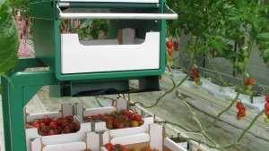 Greenhouse Equipment And Automation For Every Size Operation