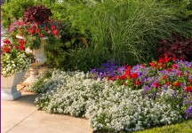 Proven Winners' Princess and Knight lobularia collections thrive in areas with lots of sunlight,