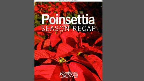 Download: 2012 Poinsettia Season Recap Whitepaper