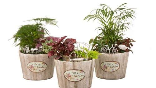 Hermann Engelmann Offers Container Fairy Gardens Through Walmart