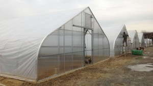 LINX Greenhouses Division Adds An Affordable New Tier To Nexus Corp.'s Offerings