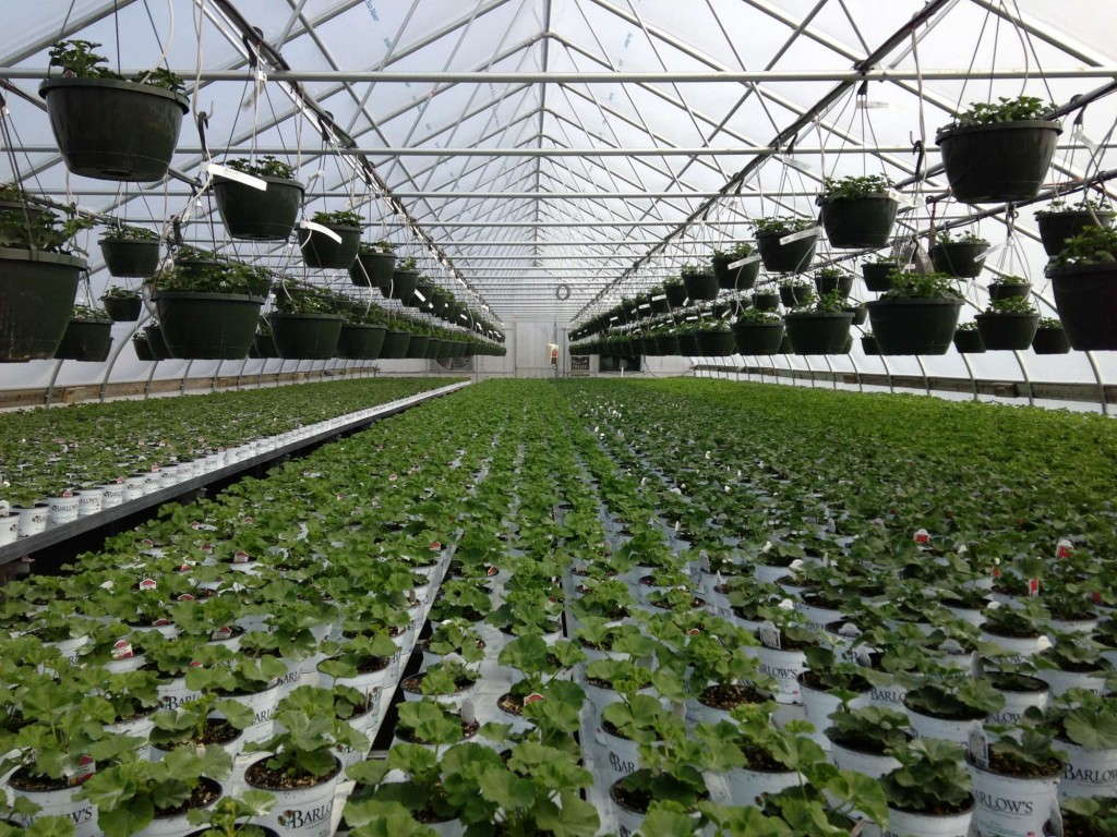 The primary market for the LINX line of greenhouses will be ornamentals although others, including vegetables, will be important markets as well.