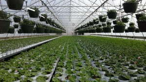 Your Best Greenhouse Is Your Best Bet For Growing Vegetables