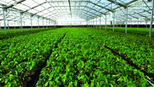 Conley's Helps Permanent Crops  Nursery With Acclimation House