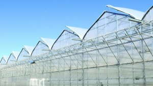 Top 10 Mistakes Greenhouse Growers Make When Planning An Expansion