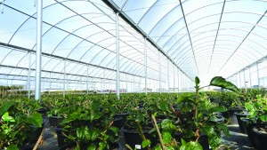 4 Ways To Finance Your  Greenhouse Upgrade