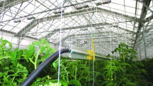 Urban Farming Has Special Heating Requirements