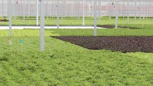 Green City Growers Is Largest Urban Food Co-op In U.S.