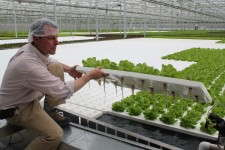 Graham Tucker showing hydroponic lettuce.
