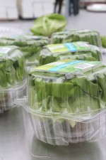 The final product, called Living Lettuce, is ready for shipment.