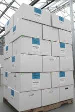 Cases of Living Butter lettuce ready for shipment.