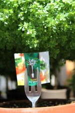 Savour Basil Tree from Pacific Plug & Liner