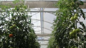 NASA Scientists To Discuss Indoor Agriculture Innovations That Could Be Used On Mars