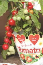 'Heartbreaker' Tomato from Headstart Nursery