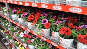 Dümmen's Confetti Garden Streamlines Container Garden Production [Medal Of Excellence For Marketing]