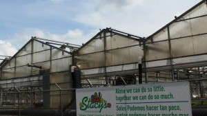 Stacy's Greenhouses Files For Bankruptcy