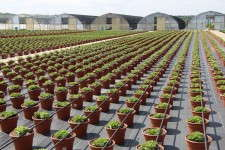 Krueger-Maddux Greenhouses