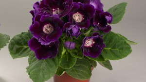 7 Blooming Potted Plants You Should Know: Part One