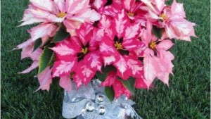 Blooming Potted Plants You Should Know: Part Two
