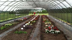 Impatiens Downy Mildew: 2013 And Beyond