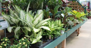 tropical plants at Wilsons Garden Center