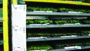 Wenke Greenhouses' Transparent Plug Treatments