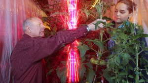 LEDs Reduce Costs For Greenhouse Tomato Growers According To Purdue Study